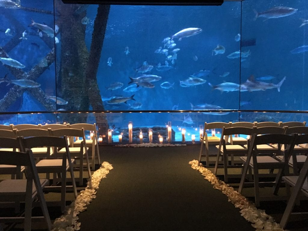 Audubon Aquarium Wedding New Orleans Party Rentals